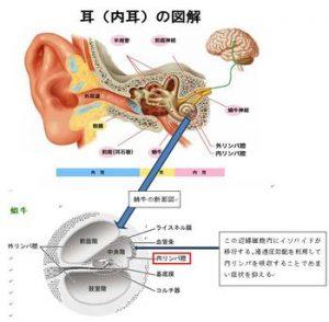 イソバイドの作用点(内耳)の図