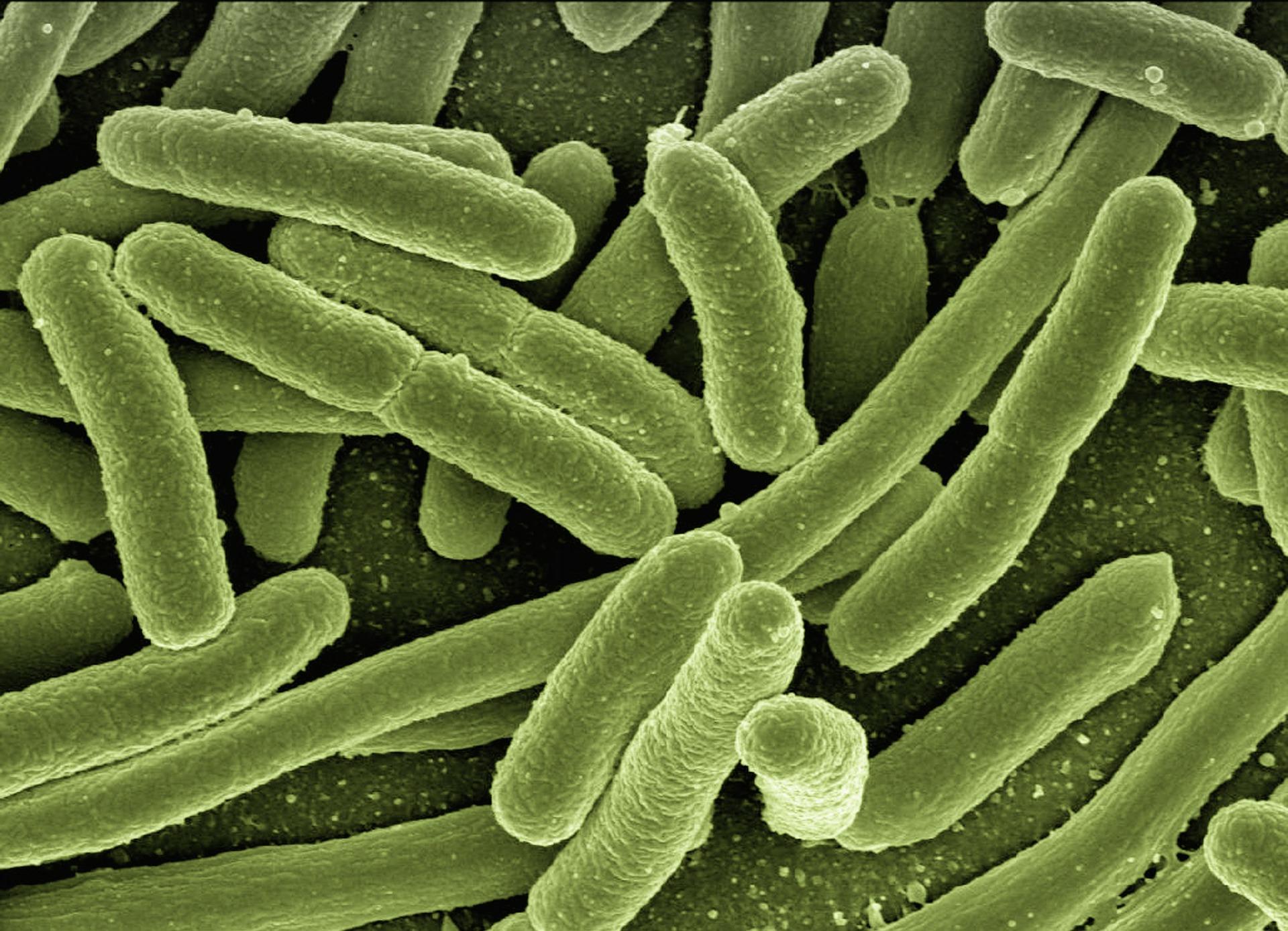 強力ポステリザン軟膏に含まれる大腸菌死菌浮遊液のはたらきを患者様へお伝えする