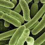 CD8T-cancer-probiotics