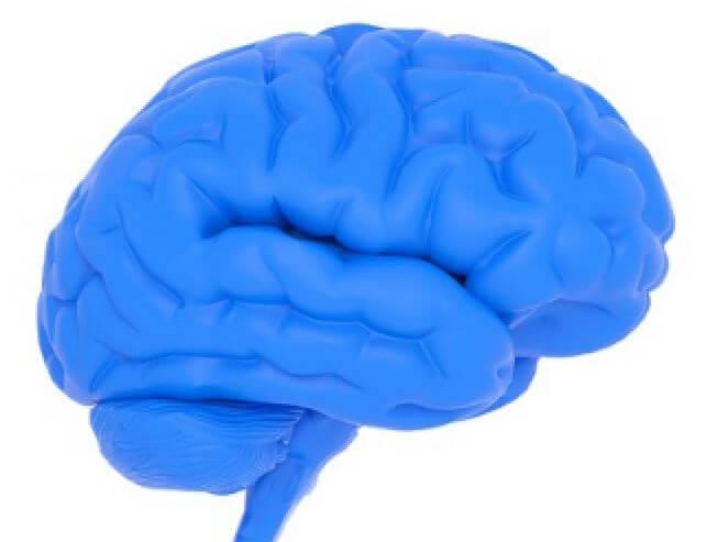aromatase-brain